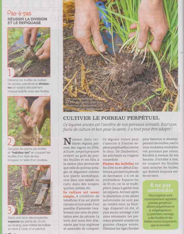au jardin - Page 42 327
