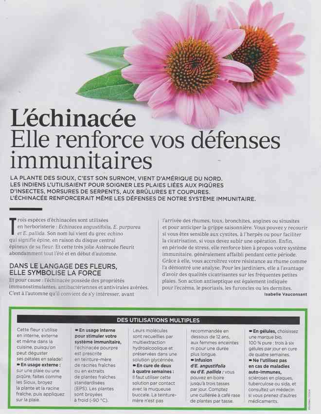 les plantes qui soignent - Page 14 334