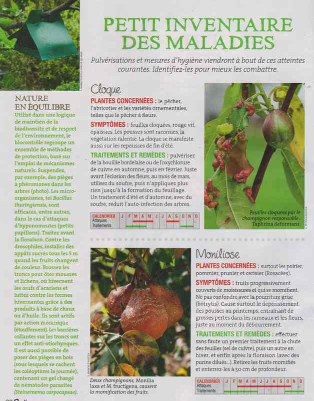 les maladies au jardin - Page 3 335
