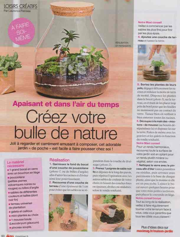 plantes d'intérieur - Page 4 347