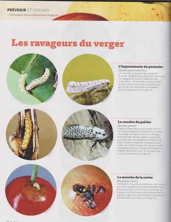 les maladies au jardin - Page 5 34b10