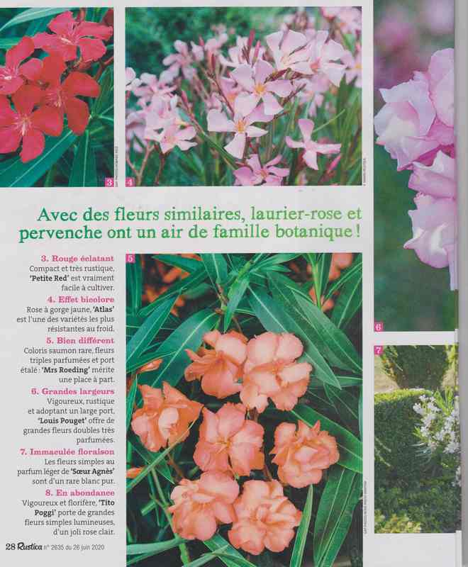 au jardin - Page 36 3a10