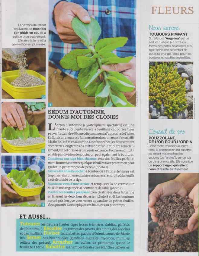 au jardin - Page 37 3a11