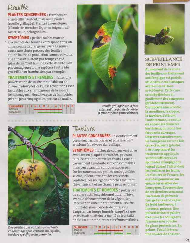 les maladies au jardin - Page 3 3a21