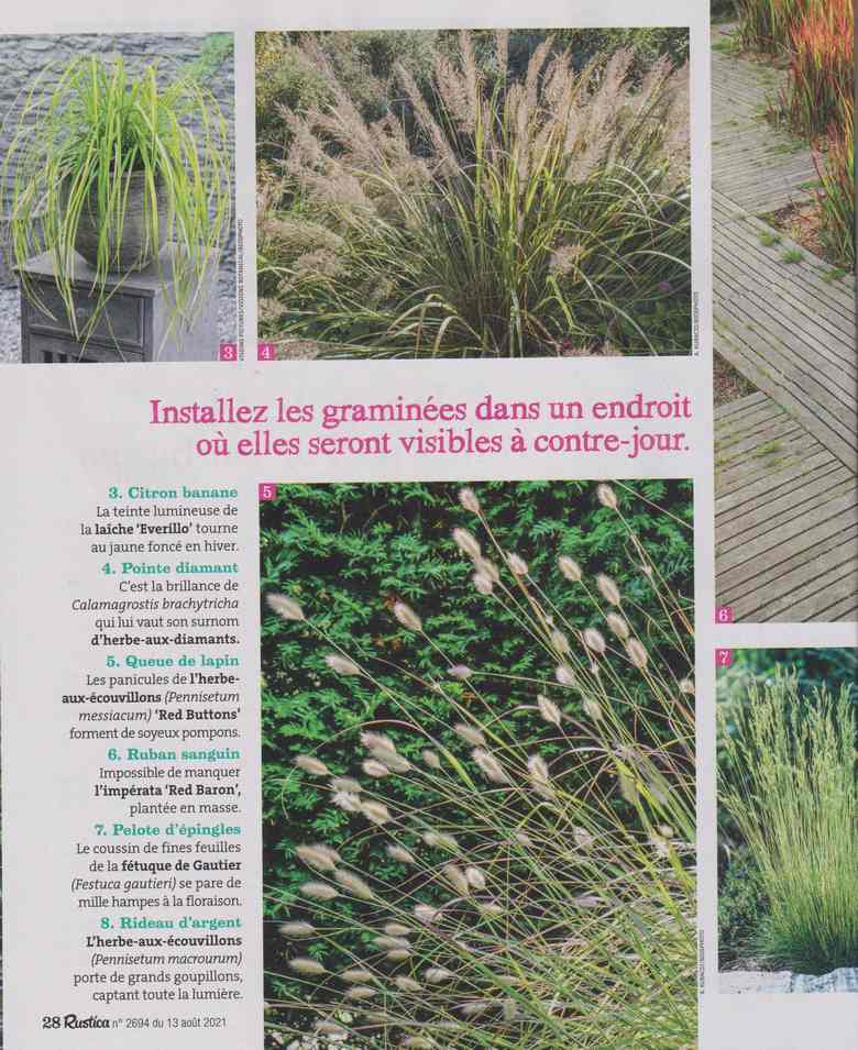 au jardin - Page 26 3a36