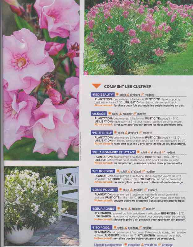au jardin - Page 36 3b10