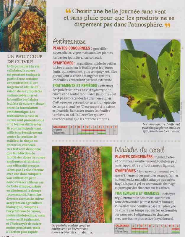 les maladies au jardin - Page 3 3b13