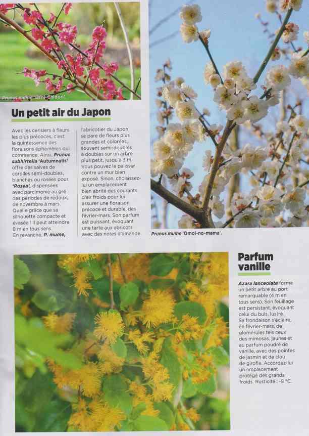 au jardin - Page 7 3b14