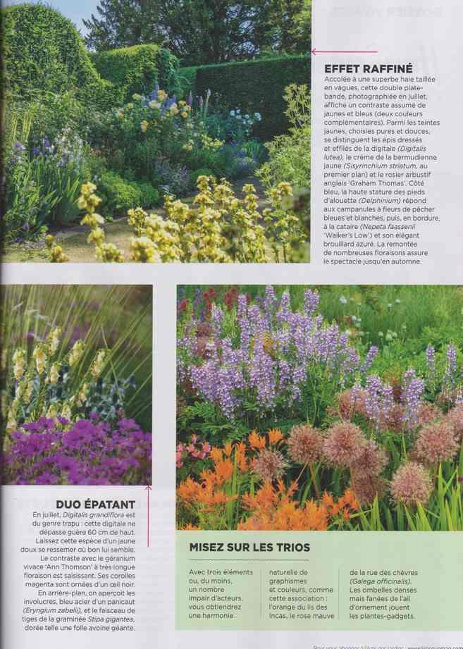 au jardin - Page 9 3b15