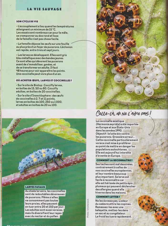 les bestioles - Page 3 3b19