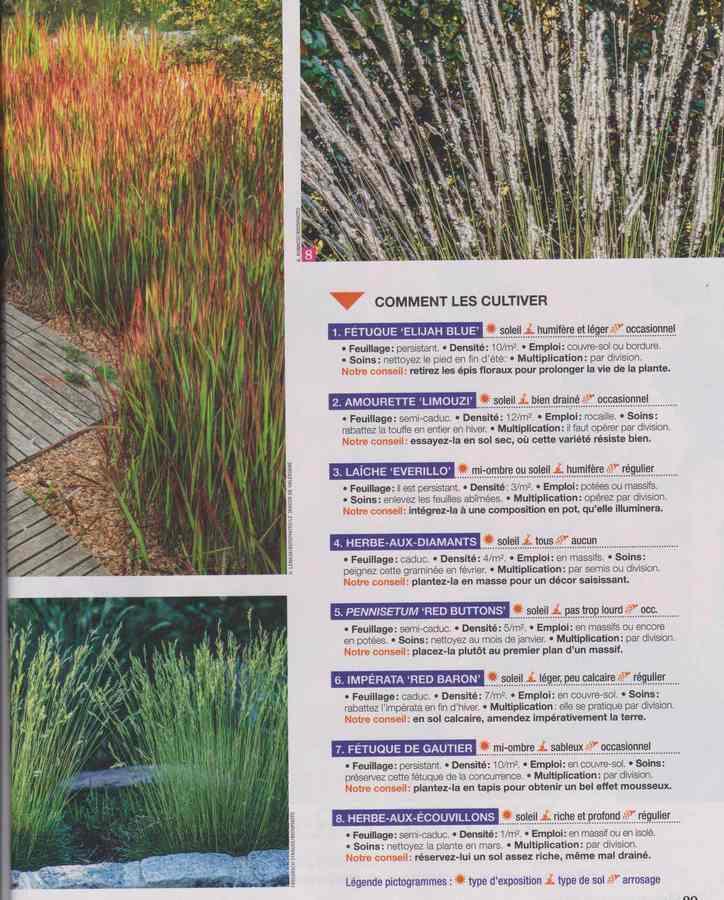 au jardin - Page 26 3b22