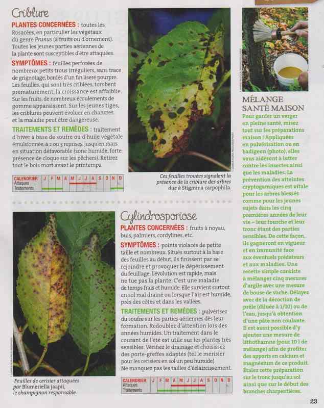 les maladies au jardin - Page 3 3c11