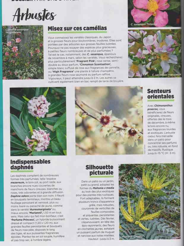 au jardin - Page 7 3c12