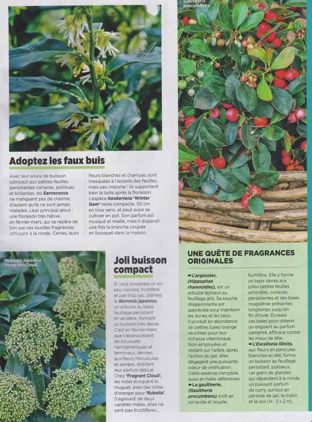 au jardin - Page 7 3d11