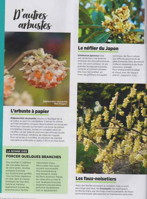 au jardin - Page 7 3e11
