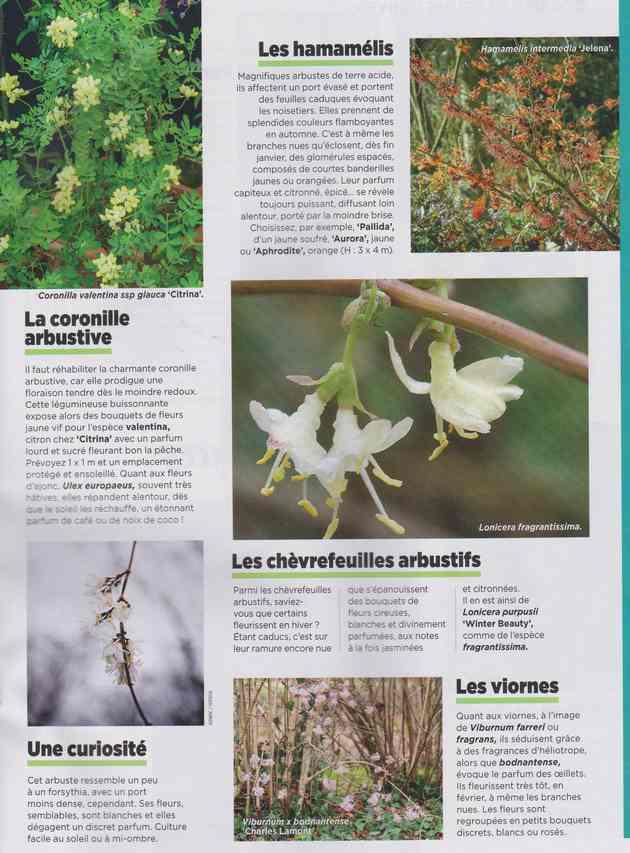 au jardin - Page 7 3f11