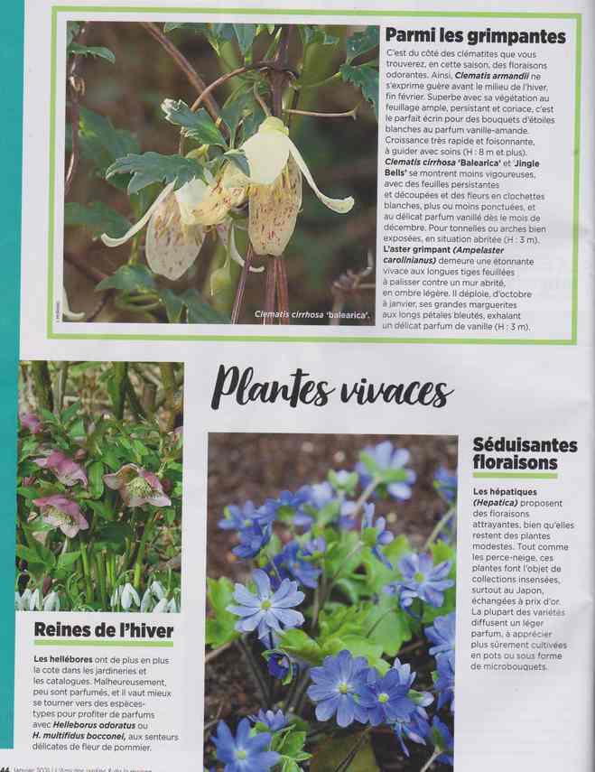 au jardin - Page 7 3g11