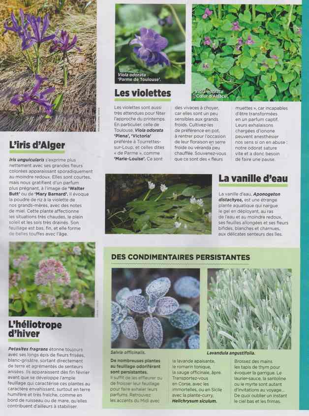 au jardin - Page 7 3h10