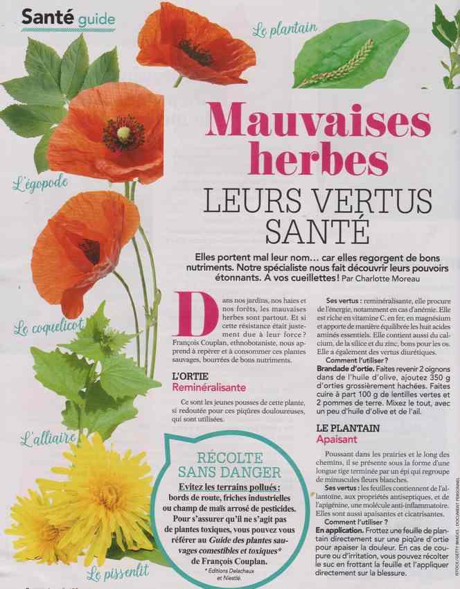les plantes qui soignent - Page 13 418