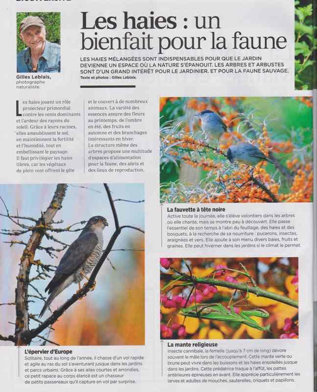au jardin - Page 43 421