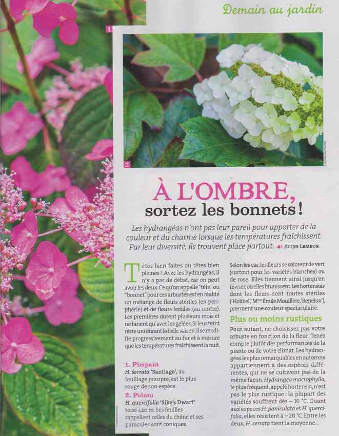 au jardin - Page 4 424