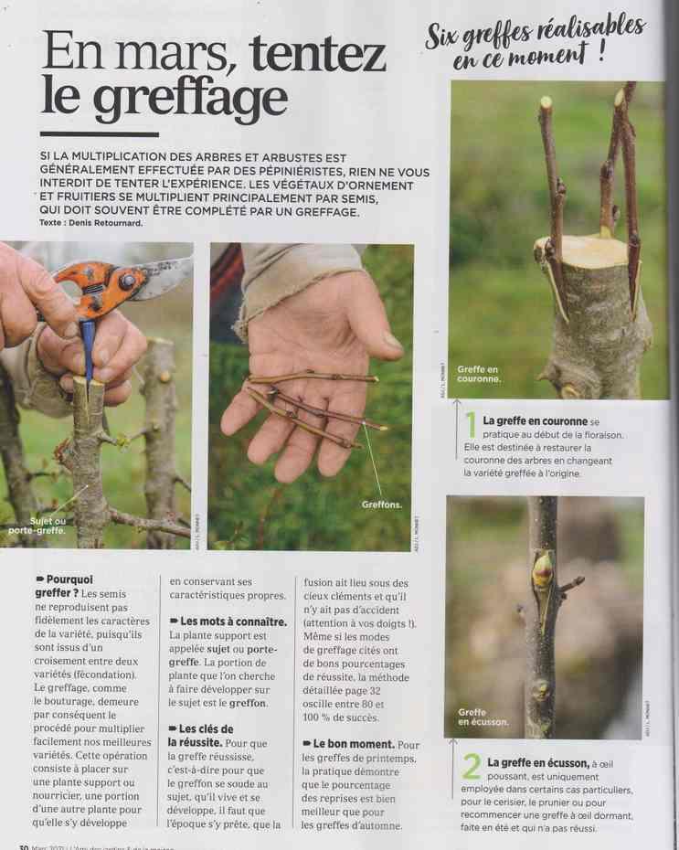 au jardin - Page 9 434
