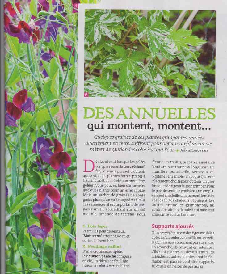 au jardin - Page 24 441