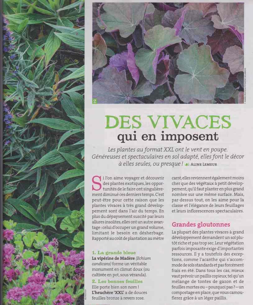 au jardin - Page 28 446