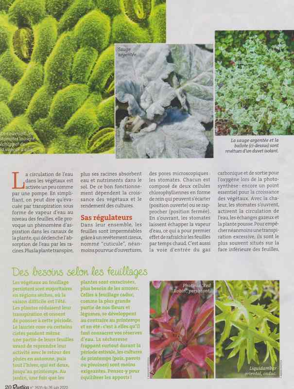 au jardin - Page 36 4a10