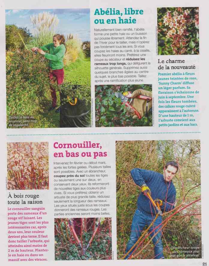 au jardin - Page 8 4a20