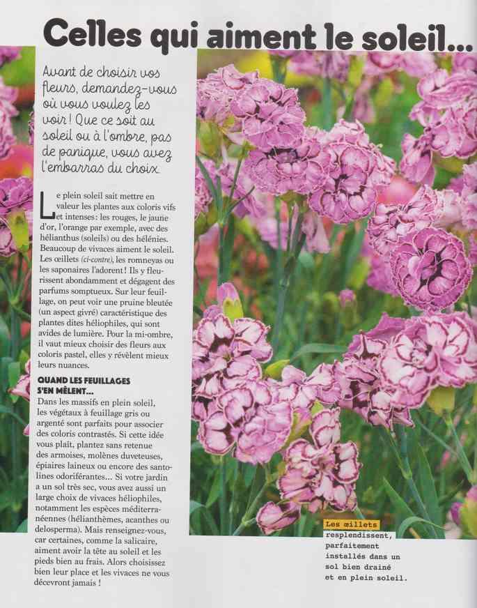 au jardin - Page 17 4a26