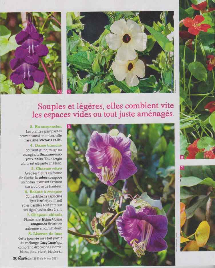 au jardin - Page 24 4a28