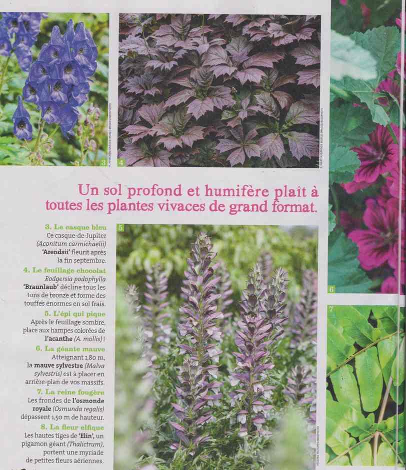 au jardin - Page 28 4a33