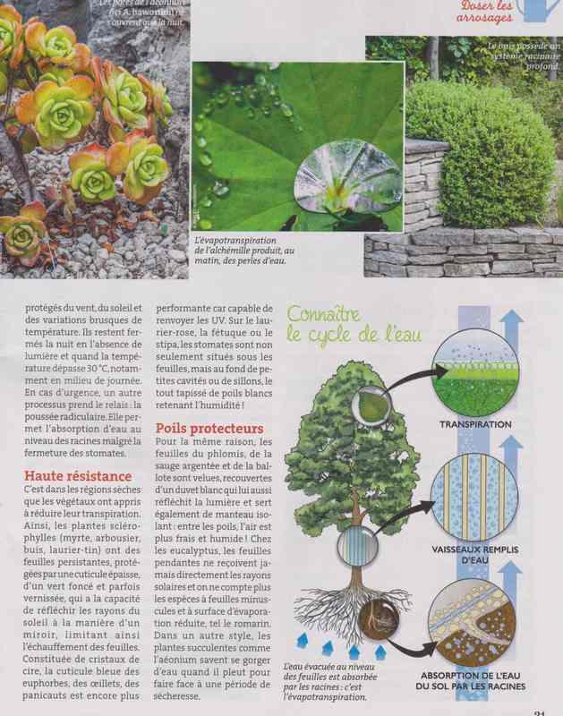 au jardin - Page 36 4b10