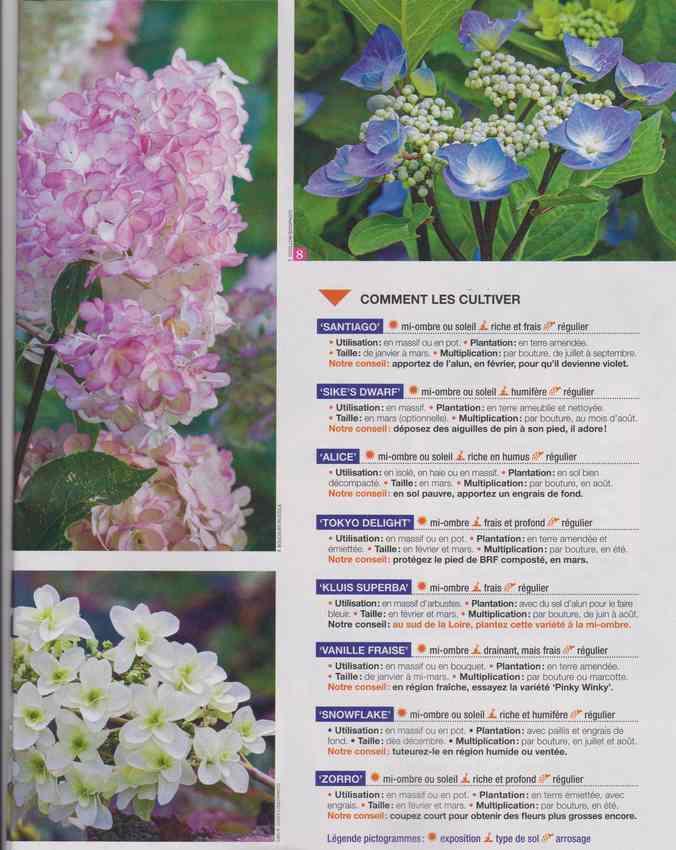 au jardin - Page 4 4b12