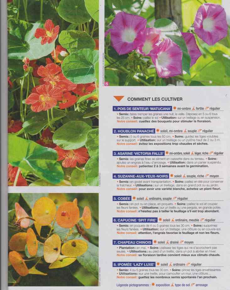 au jardin - Page 24 4b21
