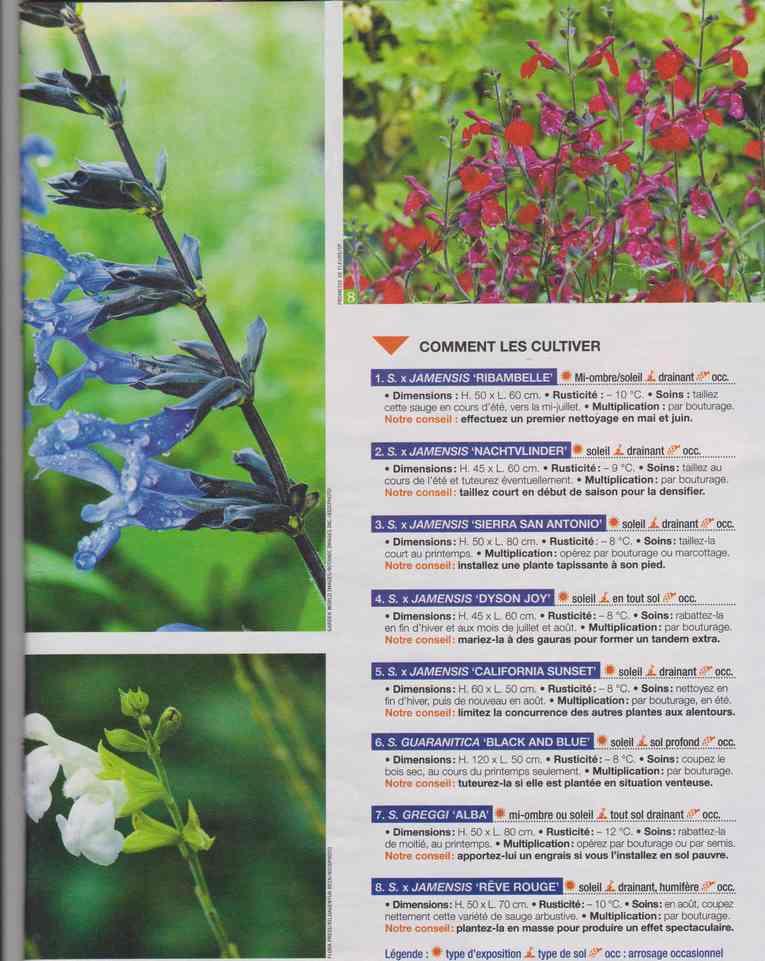au jardin - Page 26 4b22