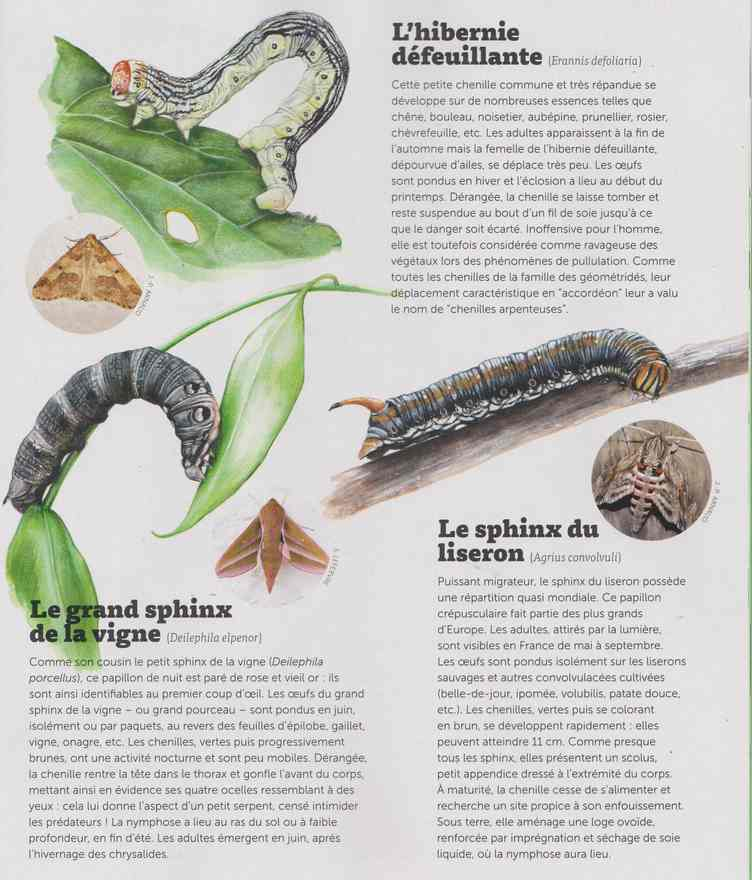 les bestioles - Page 3 4b24