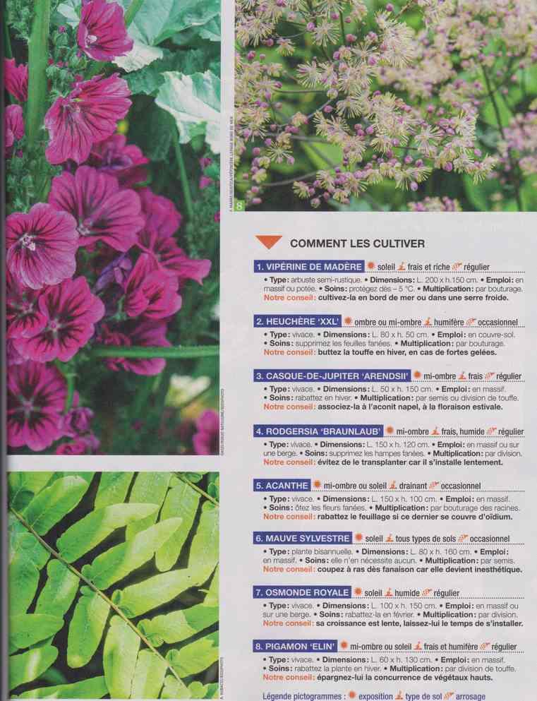 au jardin - Page 28 4b26