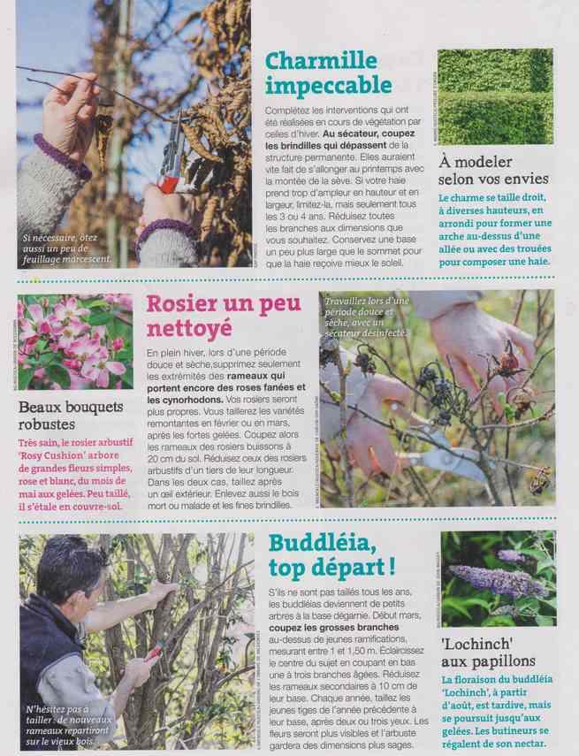 au jardin - Page 8 4c15
