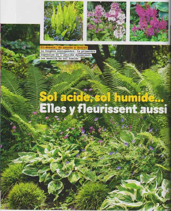 au jardin - Page 17 4c19