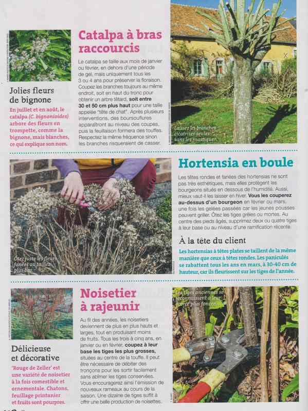 au jardin - Page 8 4d13