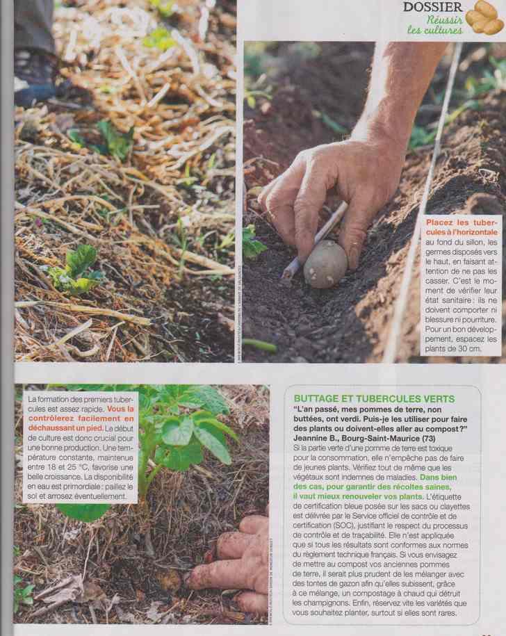 au jardin - Page 12 4d14