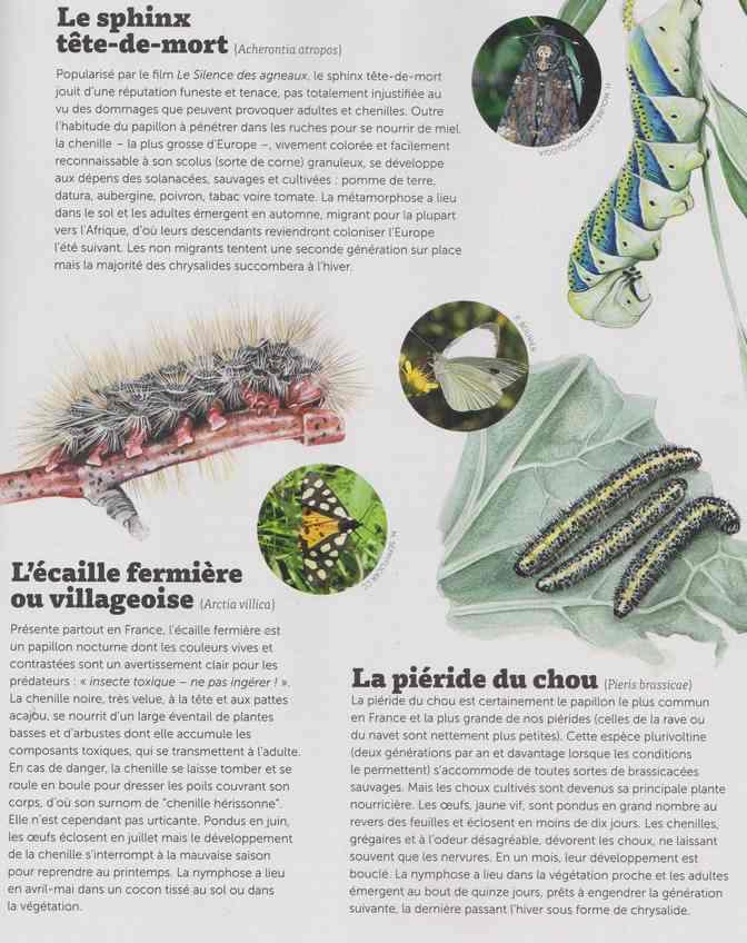 les bestioles - Page 3 4d16