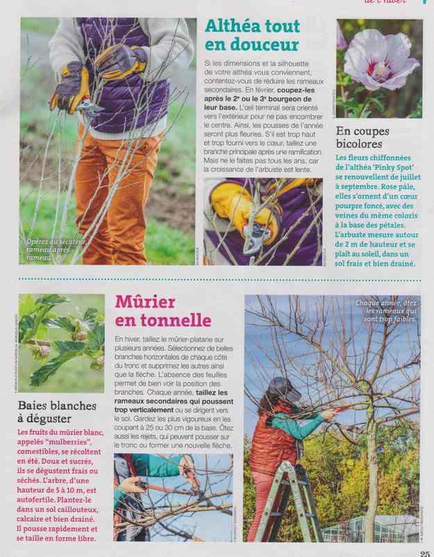 au jardin - Page 8 4e13
