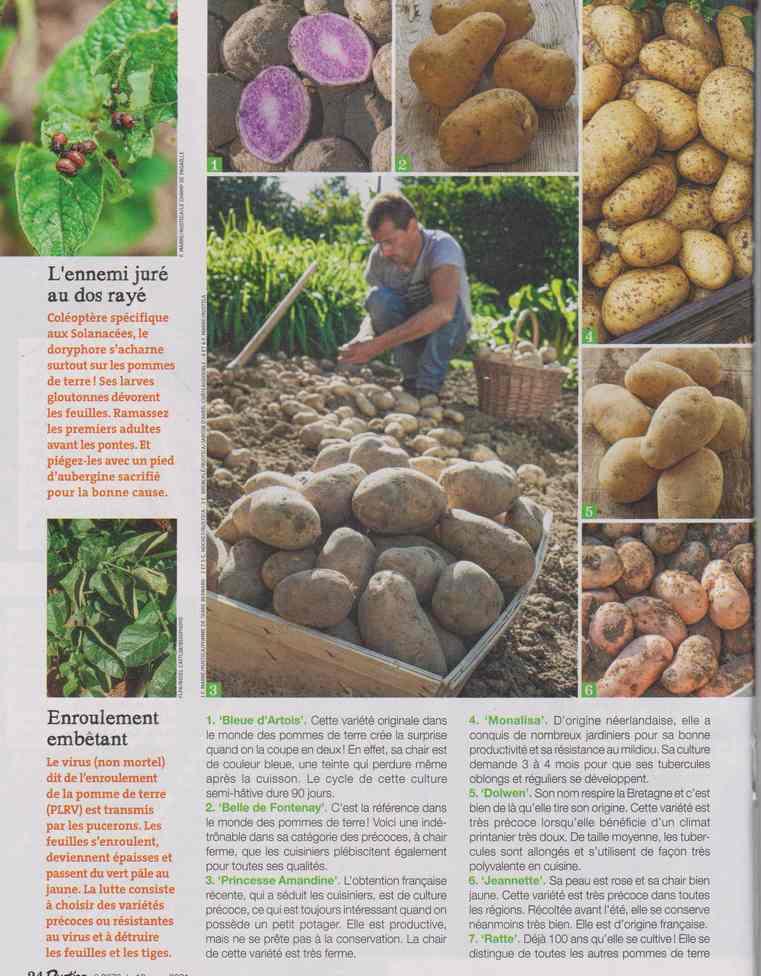 au jardin - Page 12 4e14