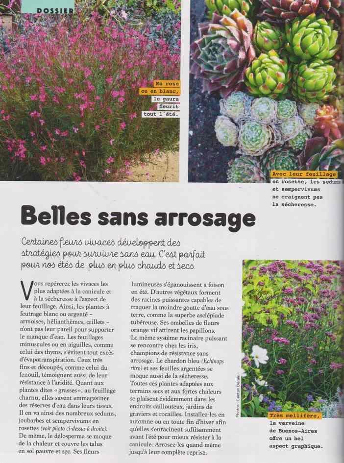 au jardin - Page 17 4e15