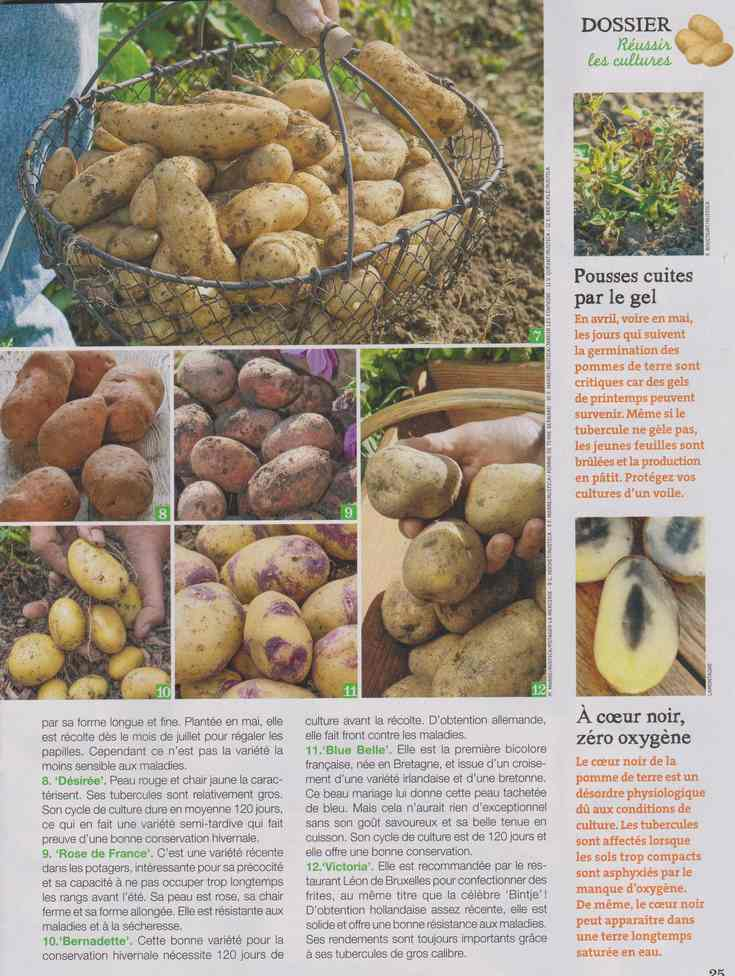 au jardin - Page 12 4f14