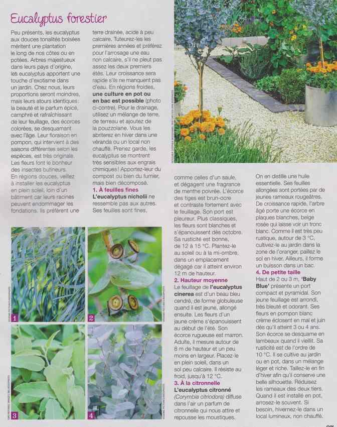 au jardin - Page 40 4g10