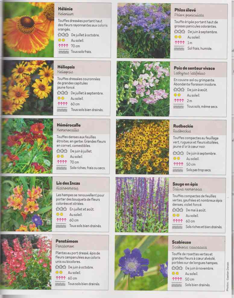 au jardin - Page 17 4h11